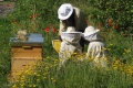 Bijen Camping La Chassagne